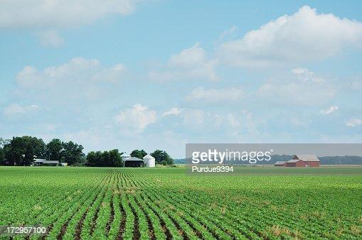インディアナ大豆フィールドと農場