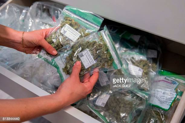 An Israeli employee carries bags of cannabis being sold for prescriptioncarrying patients at a dispensary by Israeli medical cannabis company Tikun...
