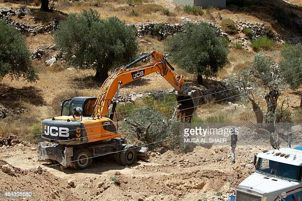 An Israeli excavator uproots olive trees to make way for Israel's controversial separation barrier in the West Bank town of Beit Jala near the Jewish...