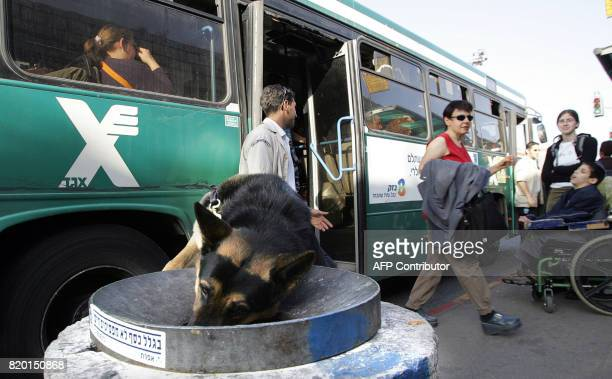 An Israeli security sniffer dog checks a bin close to a local market in central Jerusalem 22 March 2006 Israel ratcheted up security over fears that...