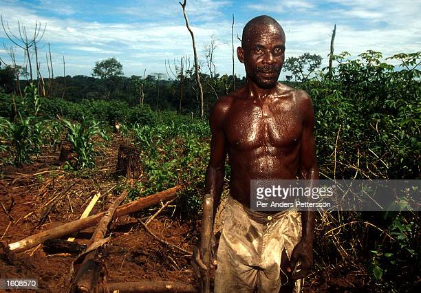 An man works as a logger in the rainforest April 10 in Kikwit The Democratic Republic of Congo Kikvit was the center of an Ebola outbreak in 1995...