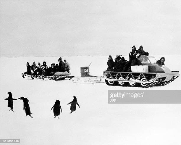 An 'Muskeg' automobile sled conducted by members of the Hillary team passes by a group of Adelie penguin near the Shackleton base South Pole in...