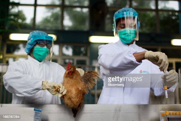 An official with the Food and Environmental Hygiene Department holds a live chicken as another handles a blood sample for testing at the Man Kam To...
