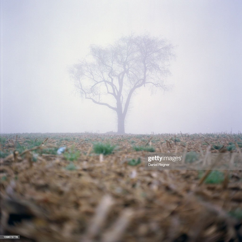 CONTENT] An old dying tree stands in the fog in the country. On a farm field the mist floats over the ground and old dead crops, showing a lonely barren landscape with only a single tree. Shot in the Winter.