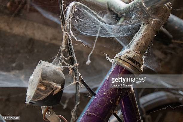 An old fashioned bicycle with old spider webs
