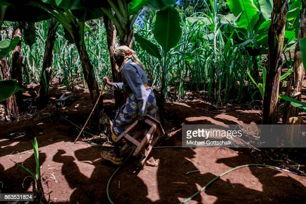 An old female farmer on a field of a farm on which plants grow with the support of the irrigation system of local farming cooperative Mitooini The...