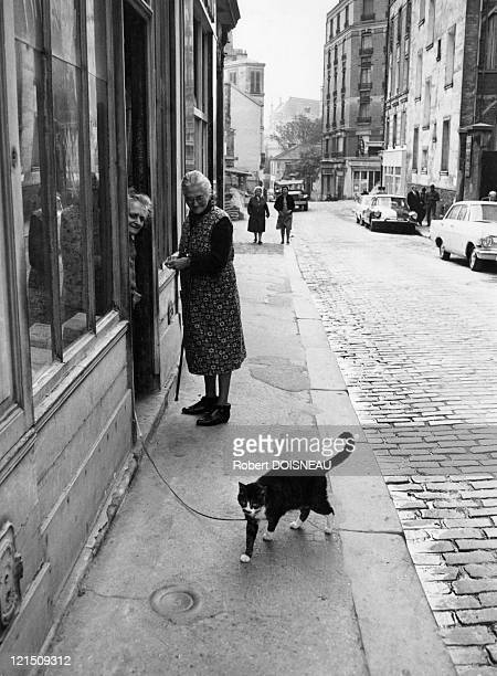 An Old Woman And Her Cat