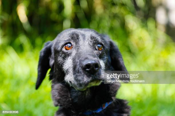 An older black mixed-breed dog in a dog shelter in Mexico City looking inquisitive