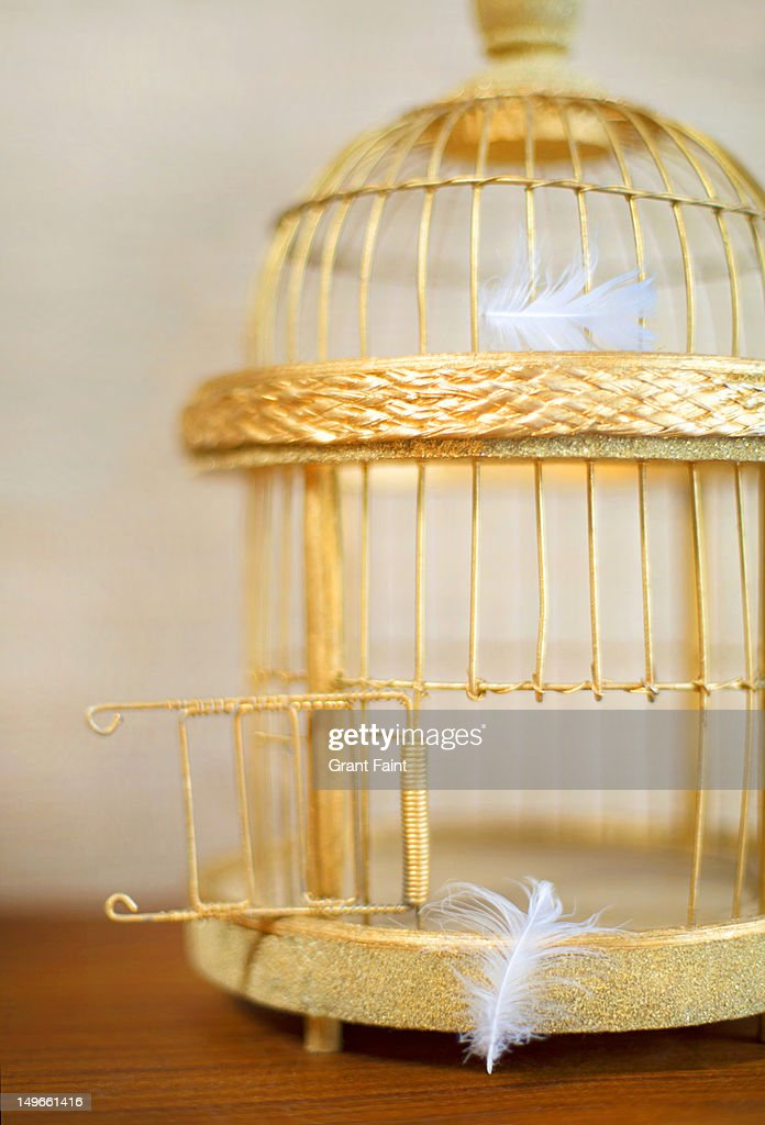 An open, golden bird cage and lost feathers : Stock Photo