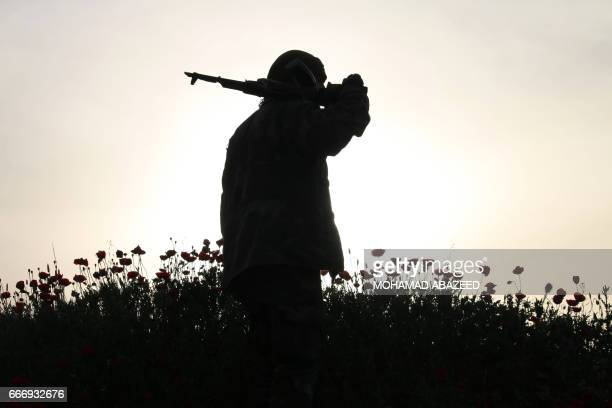TOPSHOT An opposition fighter walks in a field of poppies in a rebelheld area in the southern Syrian city of Daraa on April 10 2017 / AFP PHOTO /...