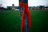 An orange bow is wrapped around a tree in memory of the victims of the mass killings at Virginia Tech April 18 2007 in Blacksburg Virginia The...
