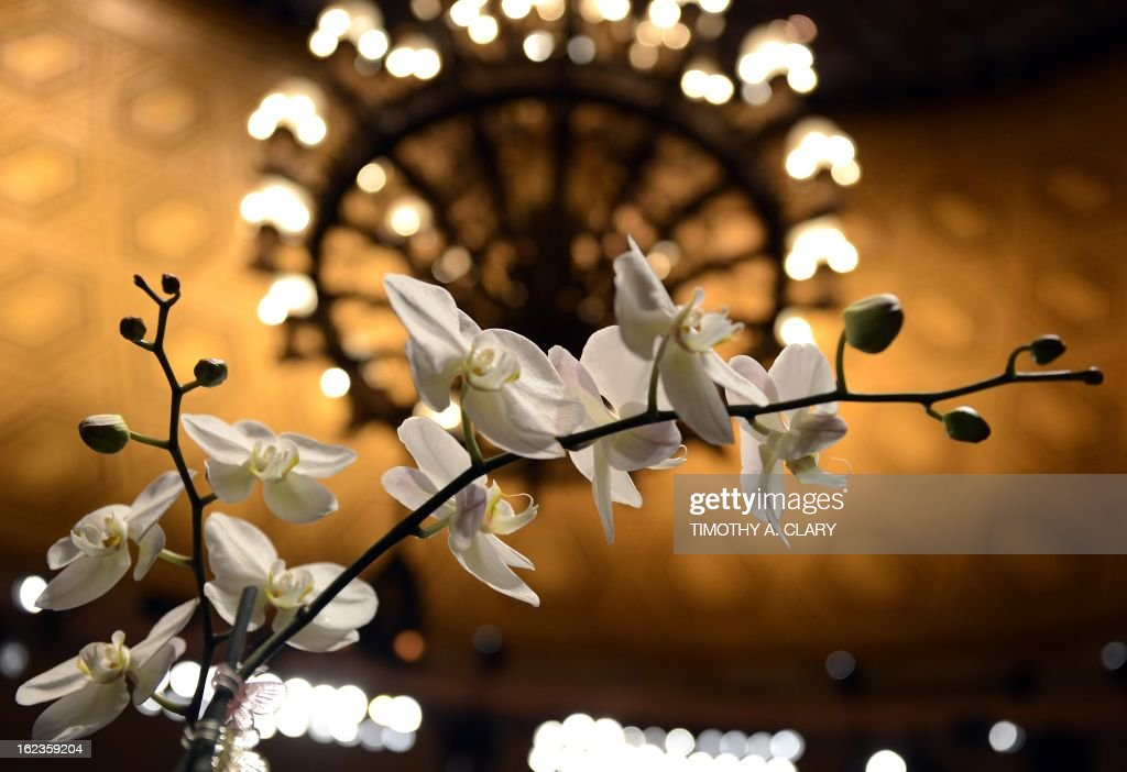 An orchid is displayed during Blooms on Broadway, the New York Botanical Expo, at Gotham Hall in New York on February 22, 2013. The show, which replaces the New York International Orchid Show, which closed six years ago, features vendors from all over the world offering a variety of orchids and more than 500 species of rare plants. The show runs until Febuary 24.
