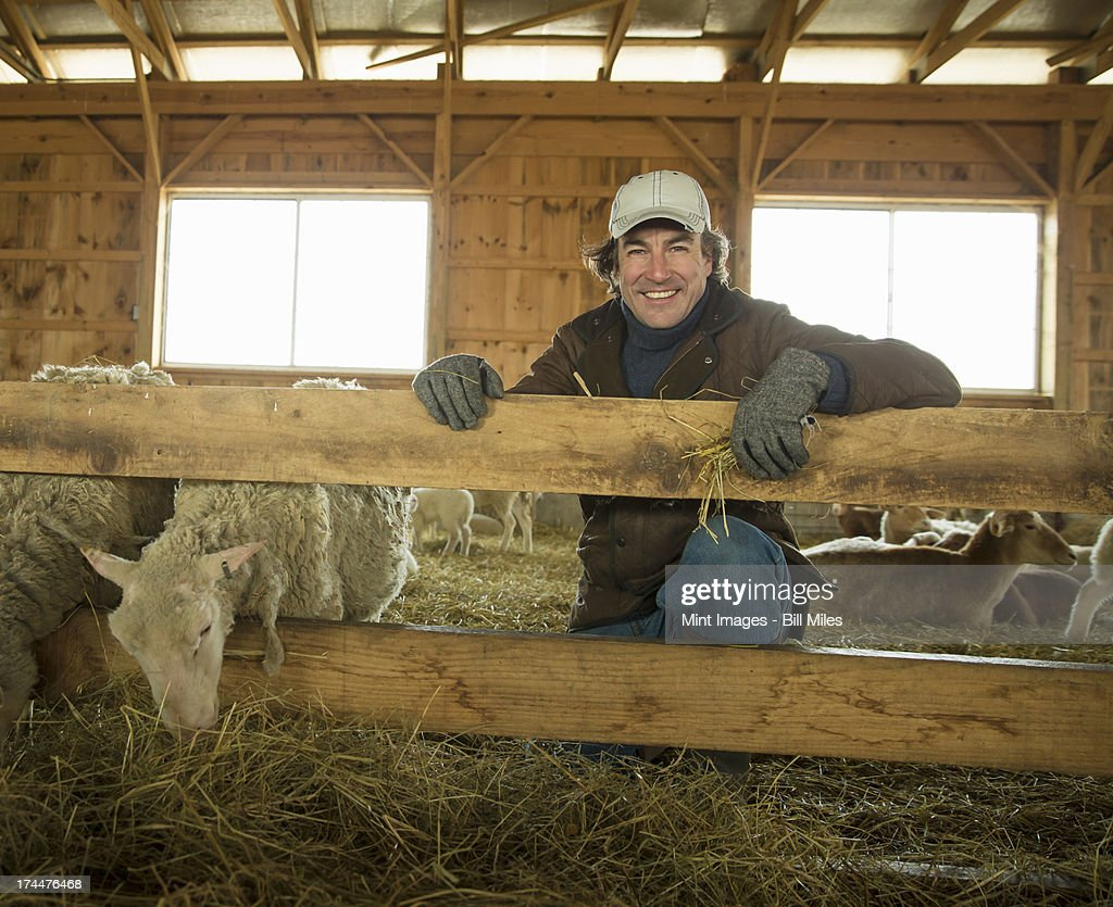 An Organic Farm in Winter in Cold Spring, New York State. A family working caring for the livestock. Farmer and sheep in a pen. : Stock Photo