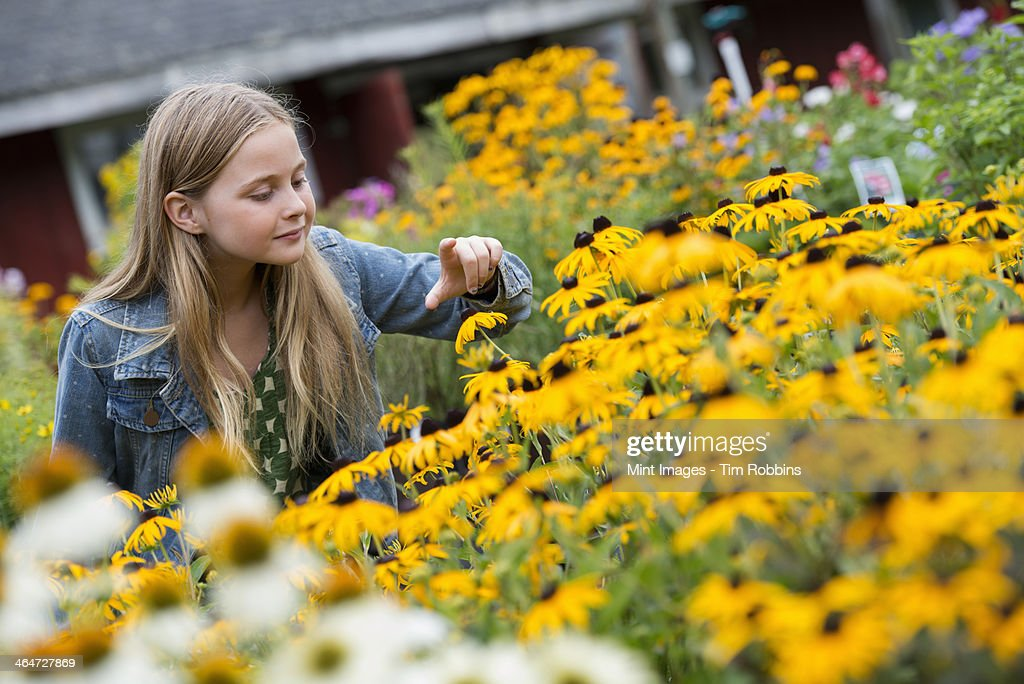 An organic flower plant nursery. A young girl looking at the flowers.