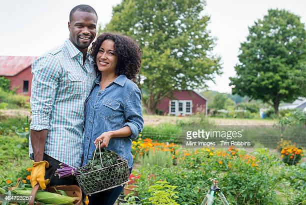 An organic vegetable garden on a farm. A couple carrying baskets of freshly harvested corn on the cob and green leaf vegetables.