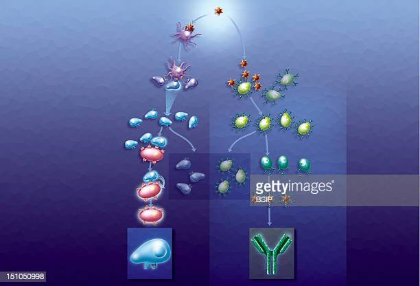An Organism's Defense Mechanisms An Organism's Defense Mechanisms Illustration Of A Body's Immune Responses To Invasions By Antigens Viruses Or...