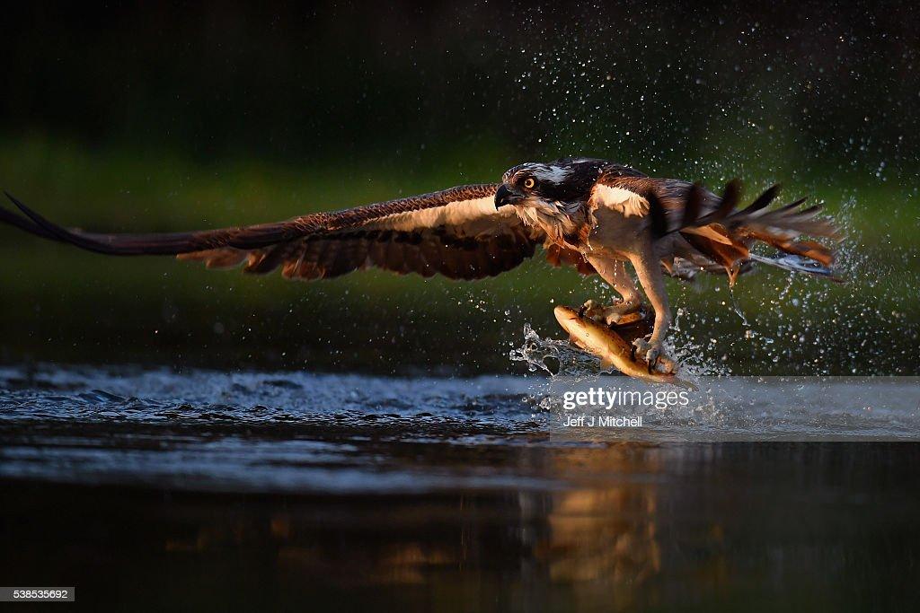 Birds Go Fishing