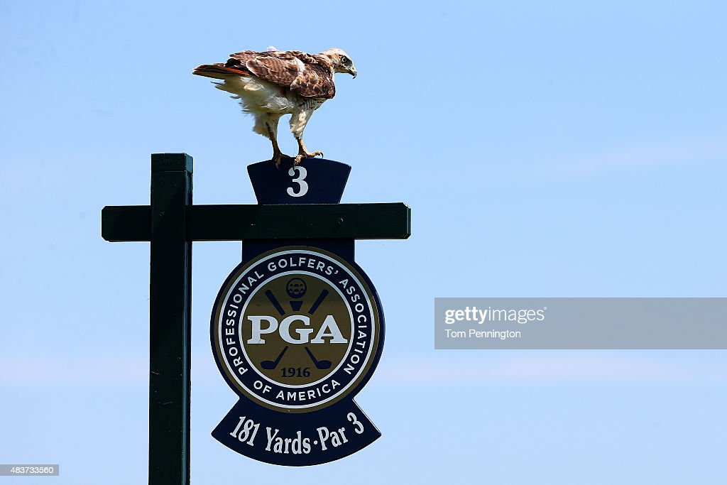 An osprey sits on the tee sign at the third hole during a practice round prior to the 2015 PGA Championship at Whistling Straits on August 12, 2015 in Sheboygan, Wisconsin.