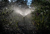 An outdoor landscape water sprinkler flows on June 4 near Santa Rosa California Despite a four year drought California's North Coast vineyards seem...