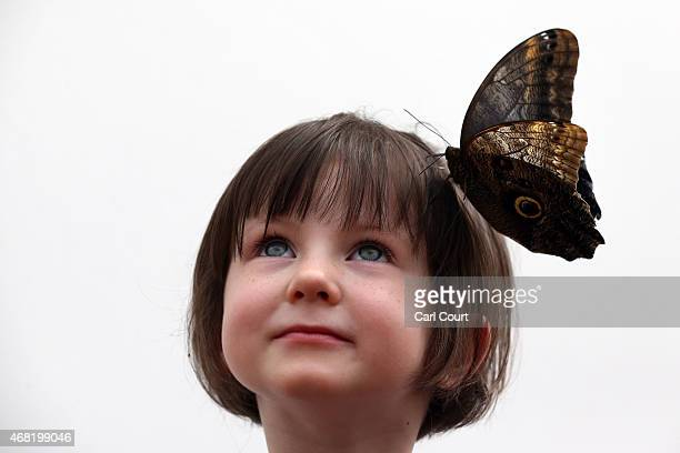 An Owl butterfly sits on the head of a girl during a photocall to highlight the forthcoming 'Sensational Butterflies' exhibition at the Natural...