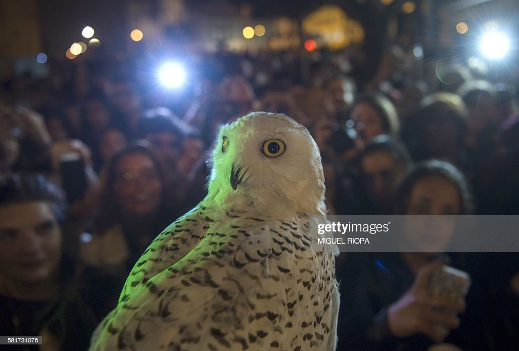 An owl is pictured nextto people queueing up to purchase copies of British author JK Rowlings latest book in the Potter series Harry Potter and the...