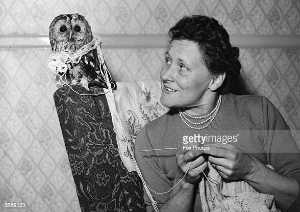 An owl wrapped up in wool next to a woman knitting