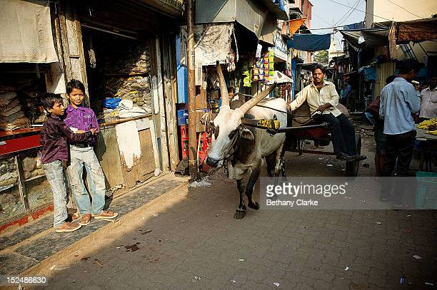 An ox cart in Dharavi November 4 2011 in Mumbai India Dharavi Asia's largest slum situated in the centre of Mumbai One million people live and work...