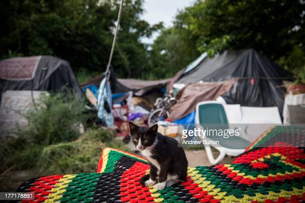 An stray cat sits outside a tent in a 'tent city' on August 21 2013 in Camden New Jersey Camden has at least three 'tent cities' where many of the...