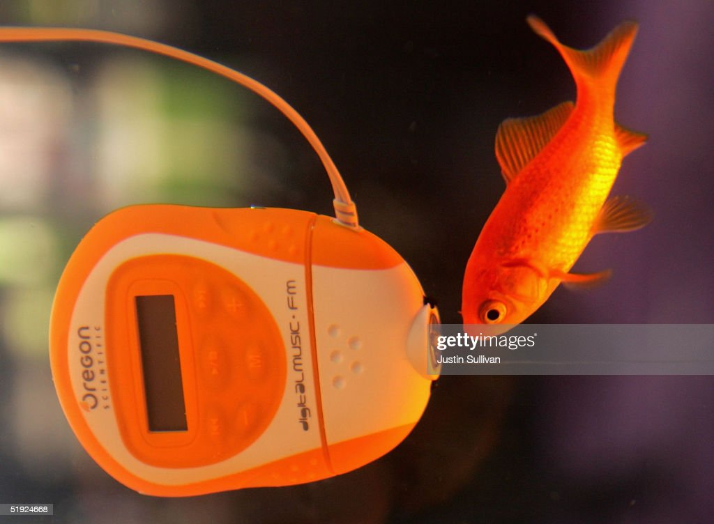 An underwater MP3 player made by Oregon Scientific is seen on display in a fish tank at the 2005 Consumer Electronics Show January 7, 2005 in Las Vegas, Nevada. The 1.5 million square foot electornic gadget show runs through January 9 and is expected to attract over 120,000 attendees.