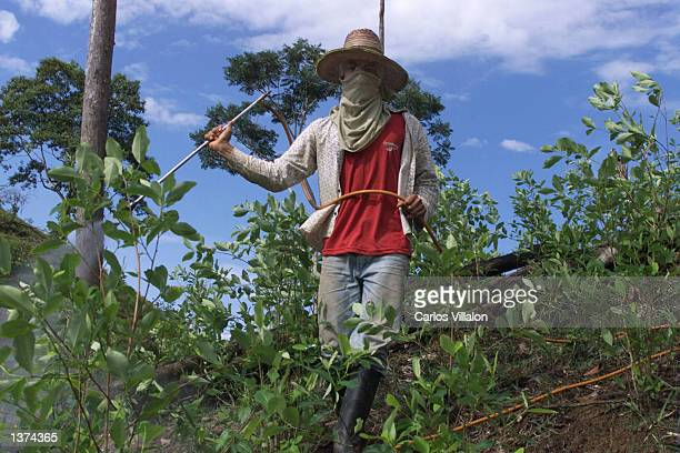 An unidentified farmer sprays pesticide onto his coca plantation August 31 2002 in La Hormiga Colombia Several farmers in the area have lost their...