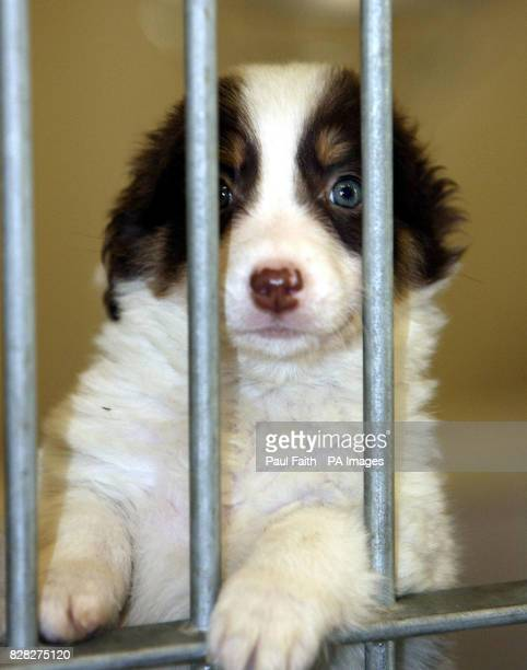 An unwanted puppy at the Dogs Trust Rehoming Centre in Ballymena Co Antrim An unprecedented number of abandoned puppies has left the Northern Ireland...