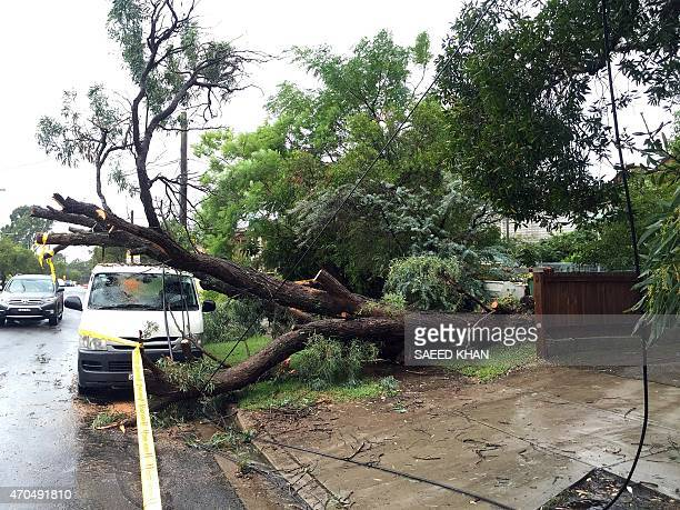 An uprooted tree fall on a parked car in the residential area of the western Sydney following an over night strong storm on April 21 2015 Australia's...