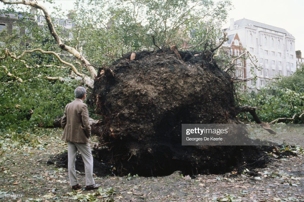 An uprooted tree in a park in England, in the aftermath of the Great Storm of 1987, 17th October 1987.