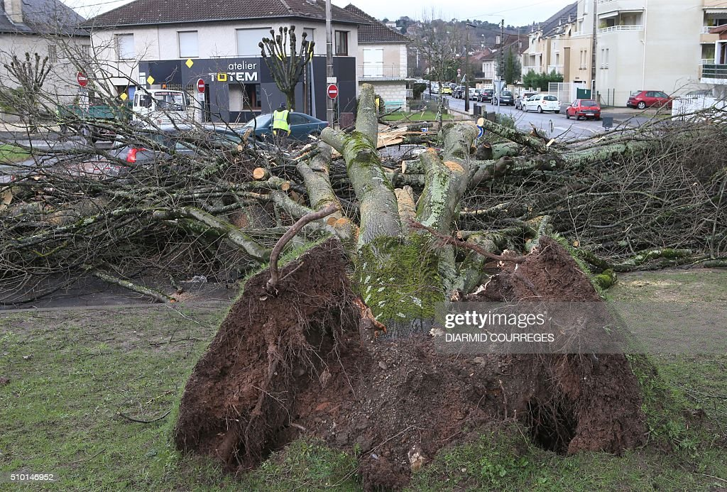 An uprooted tree is pictured in downtown Brive-la-Gaillarde, southwestern France, on February 14, 2016 after falling overnight as a small tornado hit the town. About 15,000 homes were still without power Fabruary 14, including 3,000 in the Landes department and 3,000 in the Pyrenees-Atlantiques, after a storm raged through the southwest overnight. / AFP / DIARMID COURREGES