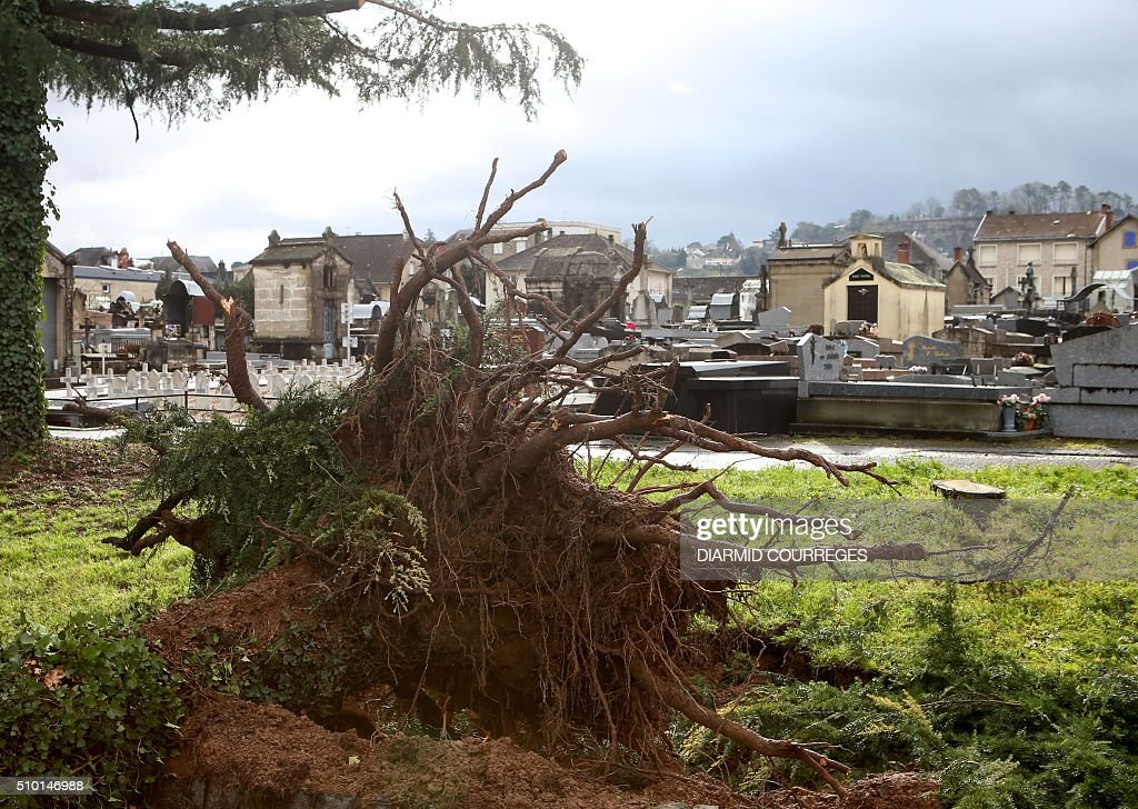An uprooted tree is pictured in the cemetery of Brive-la-Gaillarde, southwestern France, on February 14, 2016 after falling overnight as a small tornado hit the town. About 15,000 homes were still without power Fabruary 14, including 3,000 in the Landes department and 3,000 in the Pyrenees-Atlantiques, after a storm raged through the southwest overnight. / AFP / DIARMID COURREGES