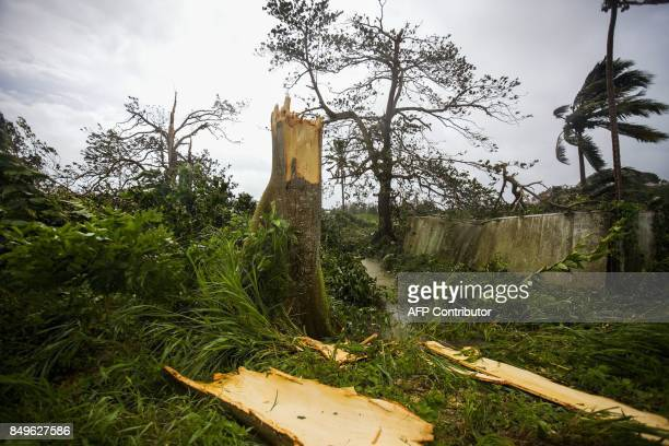 An uprooted tree is pictured near the village of Viard Petit Bourg on September 19 2017 in the French territory of Guadeloupe after the passage of...