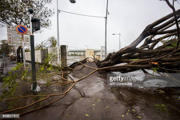 An uprooted tree is pictured on Boulevard Chanzy in downtown PointeaPitre on September 19 2017 in the French territory of Guadeloupe after the...