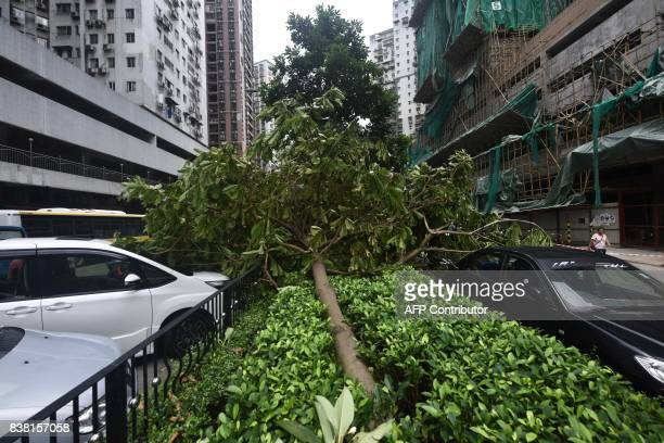 An uprooted tree is seen between parked cars in Macau on August 24 2017 The death toll from Severe Typhoon Hato rose to at least 16 after the storm...