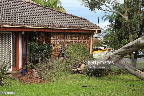 An uprooted tree lays across a street in Collaroy Plateau on April 22 2015 in Sydney Australia Three people have died and more than 200000 are still...