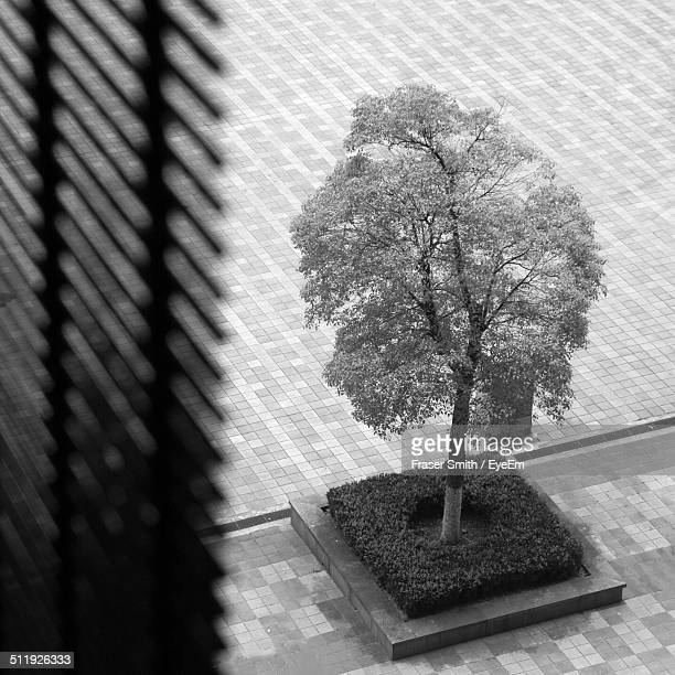 An urban view of a tree from window