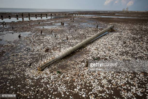 An utility pole destroyed by high tides near the seafront on April 29 2017 in Bao Thuan Village Ba Tri District Ben Tre Province Vietnam The Mekong...