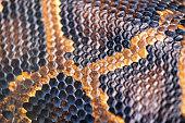 anaconda skin as a texture