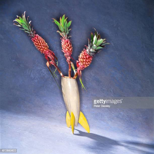 Anamorphic pineapple