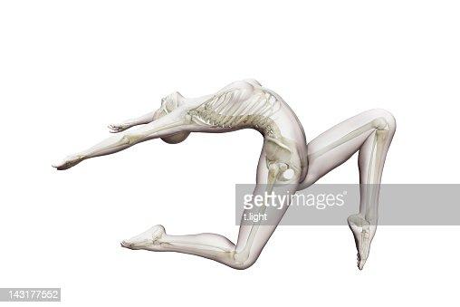 Anatomical ballet model : Stock Photo
