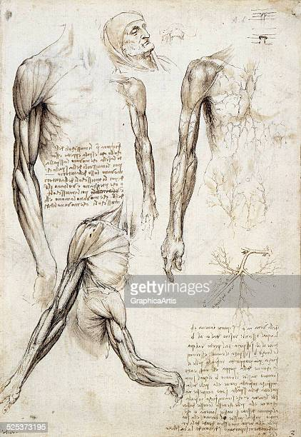Anatomical drawing of a dead man by Leonardo da Vinci pen and ink with wash and black chalk 151011 From the Royal Collection London