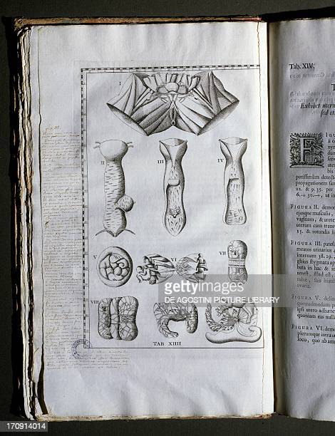 Anatomical illustrations taken from Tabulae Anatomicae by Bartholomeo Eustachi Italian anatomist edition published in 1722 in Amsterdam The...
