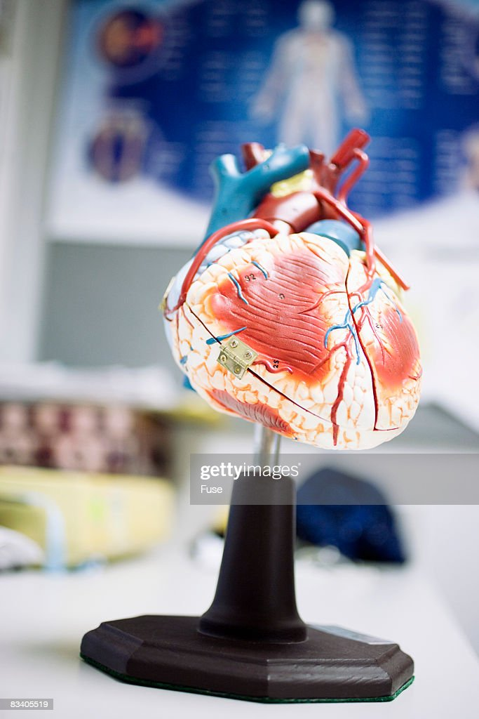 Anatomical Model of a Heart