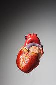 Anatomical model of human heart