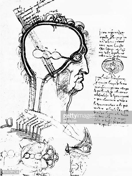 Anatomical study of face and eye by Leonardo Turine Bibliotecha Reale undated