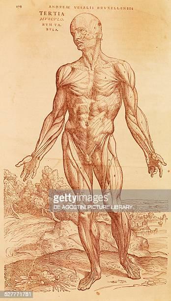 andreas vesalius and anatomy essay